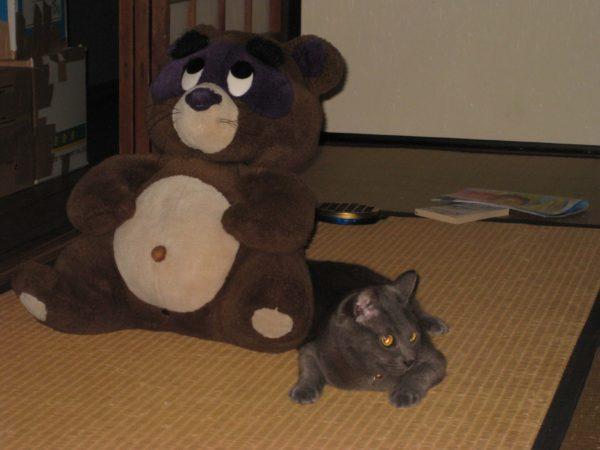 たぬきと寄り添う灰色猫