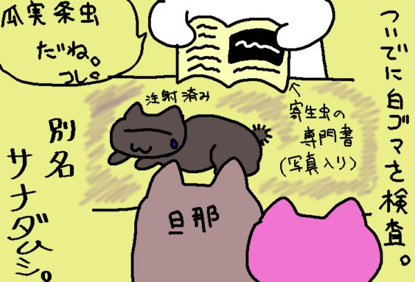 灰色猫のお尻にサナダムシがいた話