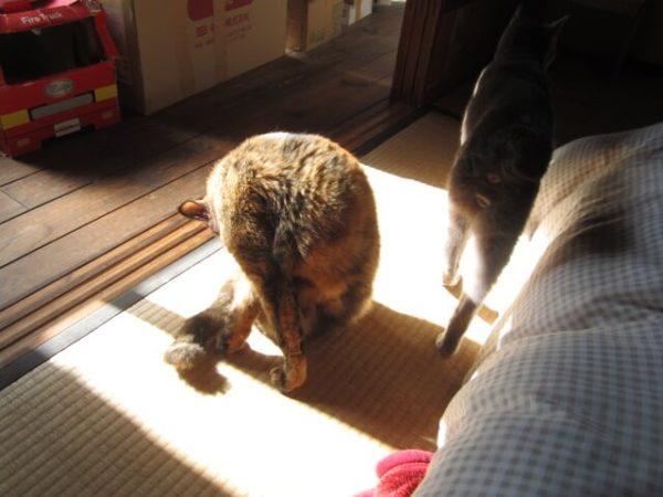 日向ぼっこしながら窓を考えてるさび猫しめじ