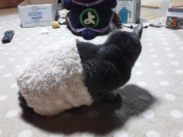 寒そうな灰色猫ししゃもに腹巻巻いてみた