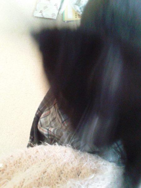 猫の写真ヘタクソ選手権