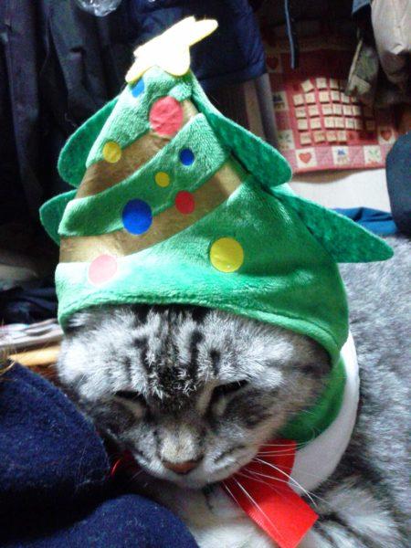 クリスマスの被り物したアメショー似の義弟