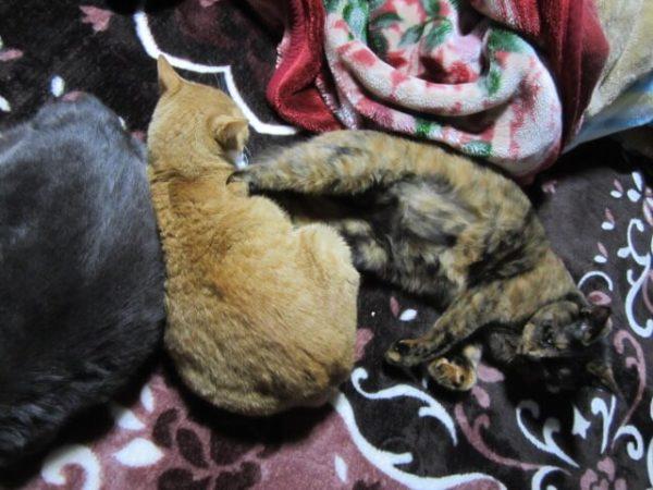 3色猫団子。仲良くない3匹の猫が仲良くしてるところ