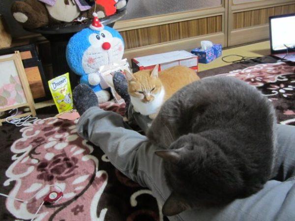 猫との生活で困ること、身動きがとれない