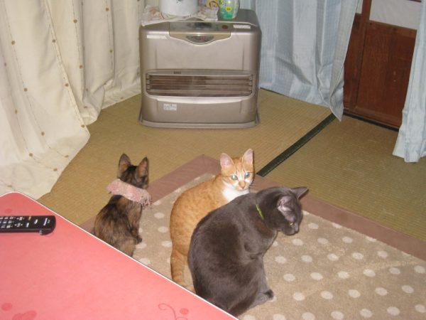 子猫時代のさび猫しめじパート2