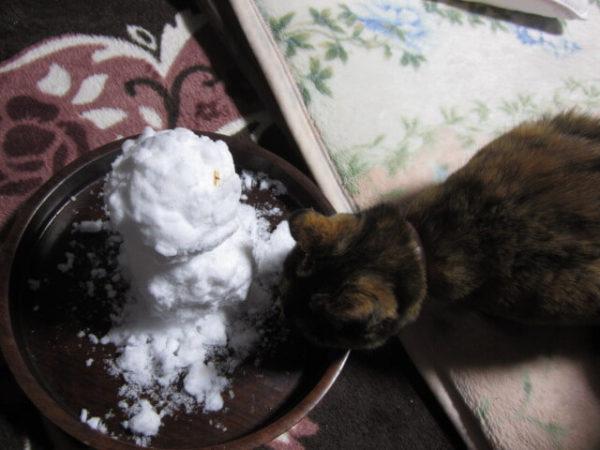 瀬戸内の田舎暮らしで貧乏ダイエット。珍しく雪が積もった