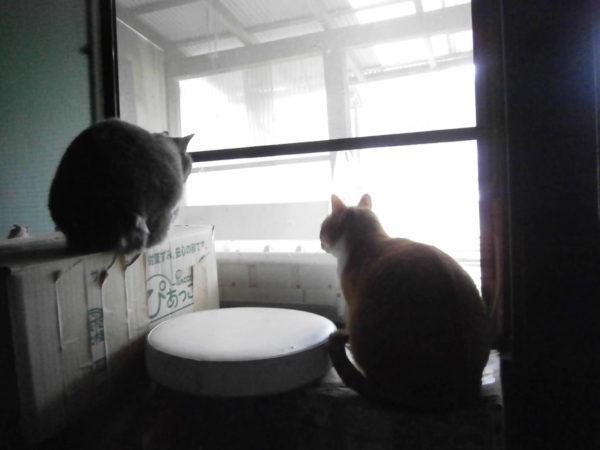 田舎暮らしで貧乏ダイエット+猫