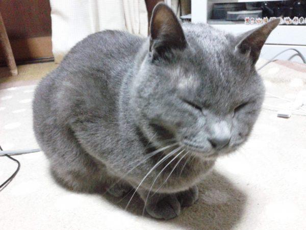 猫はヒゲすらもカワイイ