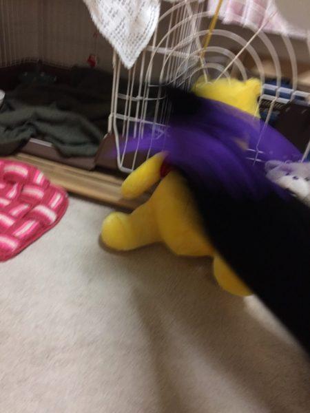 悪魔の羽根をつけてベビーサタンみたいになったくつした子猫に襲われるくまのプーさん