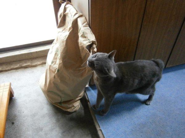 田舎暮らしのGWのレジャーはタケノコ狩り!(=゚ω゚)ノ【タケノコの下処理もご紹介】