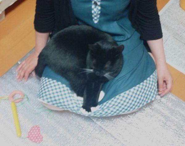 とりもちとまめちゃんの距離【猫の同居問題その2】