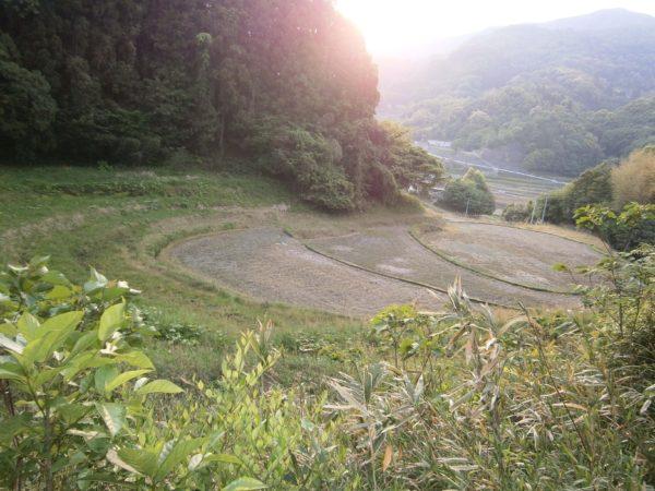 最近お気に入りの散歩道(∩´∀`)∩【田舎の初夏の風景】