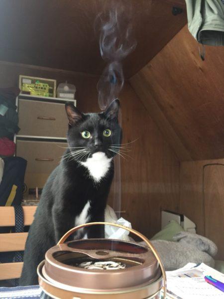 義弟猫とりもちの初体験シリーズ・蚊取り線香