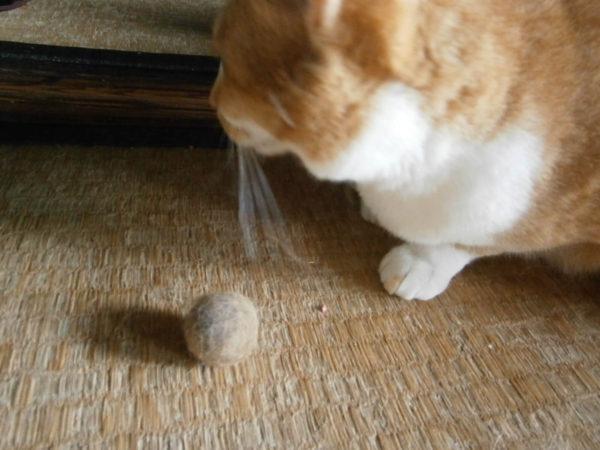 猫のブラッシングしてみた