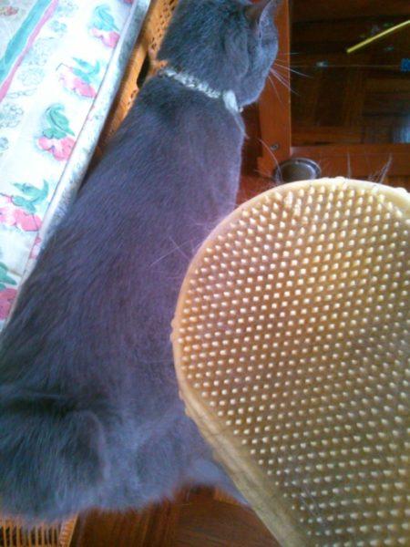 猫の熱中症予防対策