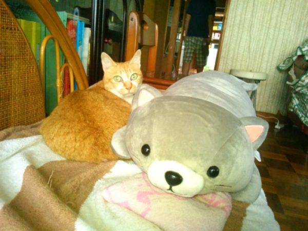 初夏、籐椅子でくつろぐ黄色猫きなこ