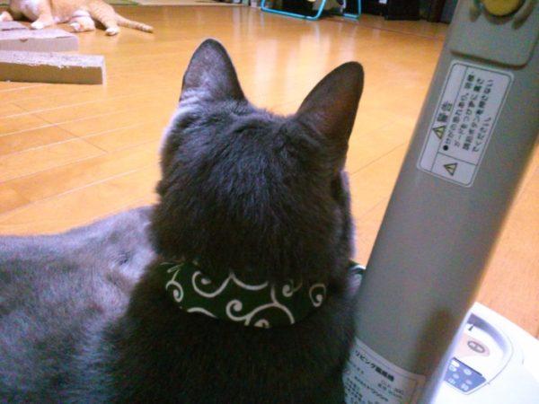 にゃんもの首輪を新しくする(・∀・)【猫の首輪をDIY・和柄カラクサ模様】