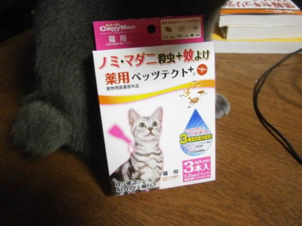 猫にノミついてた(;・∀・)【飼い猫のノミ対策】
