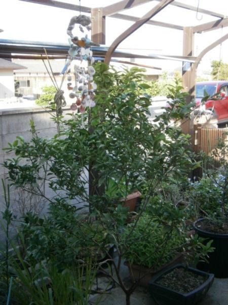 お庭をカオスに!(・∀・)【DIYでお庭オシャレ(?)化計画】