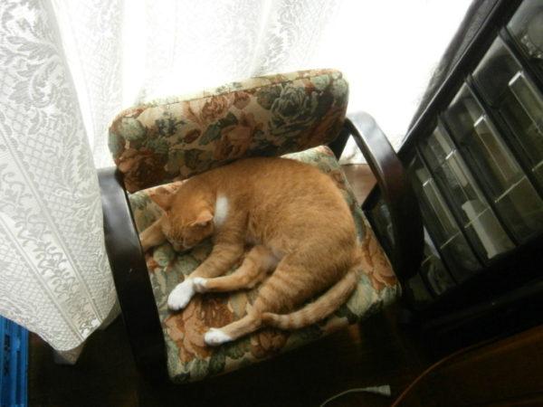窓を考える猫たちと最近のぷっこ
