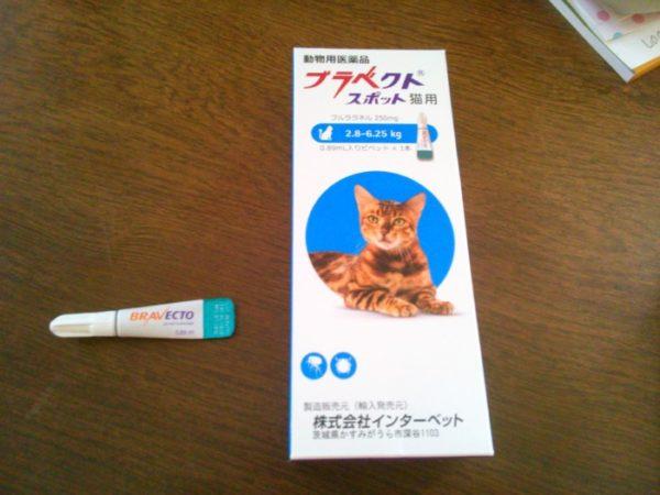 サビ猫おしめの皮膚炎【猫ノミの弊害】