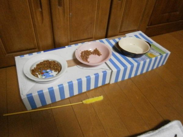 猫たちの為にランチョンマット作ったんです