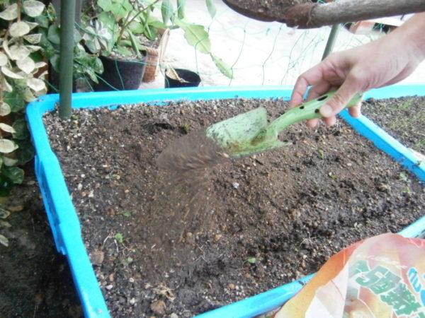 プランターで野菜栽培【ネギ】