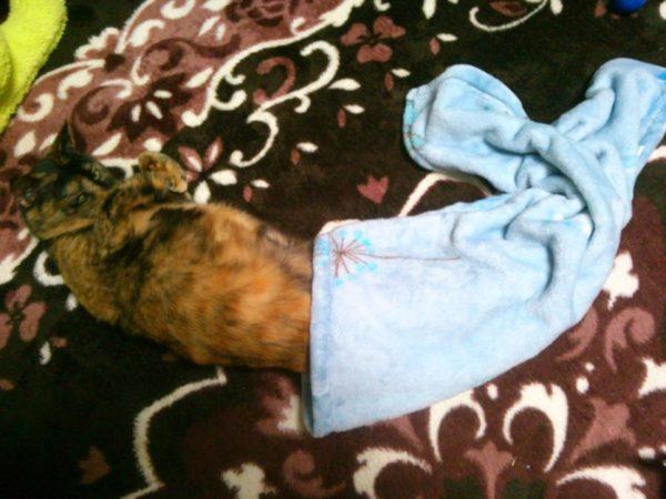 さび猫しめじの寝相アート