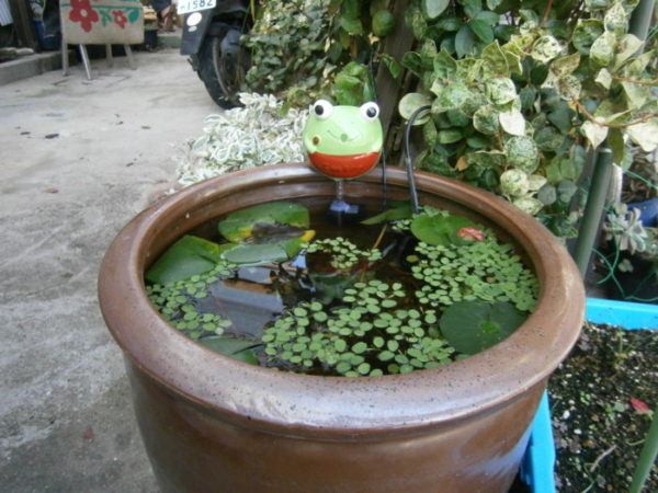 噴水をDIYしちゃいました【お庭をカオスに計画】