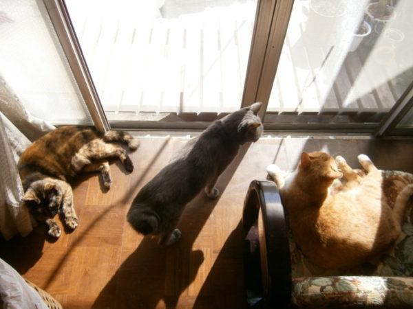 ぷっこ家のDIY真骨頂?!猫用サンルーム『にゃんルーフ』を作りました(旦那が)