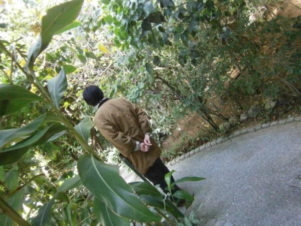 植物園がなんか好き(・∀・)