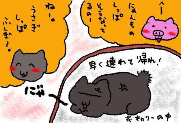 灰色猫ししゃものうさぎ尻尾のナゾ