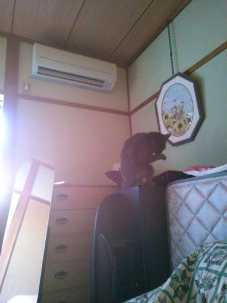 だるまストーブと猫のいる風景