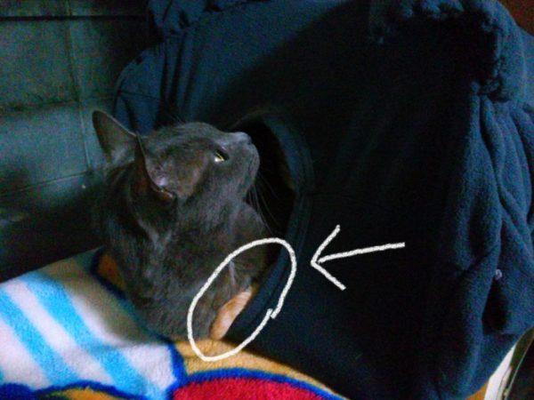 DIYの猫テントの現状