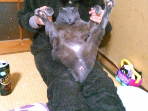 灰色猫ししゃものなまめかしい開脚