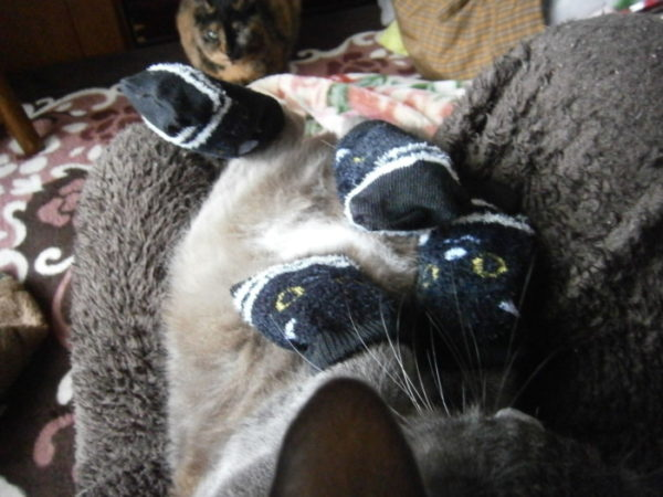 猫にくつした