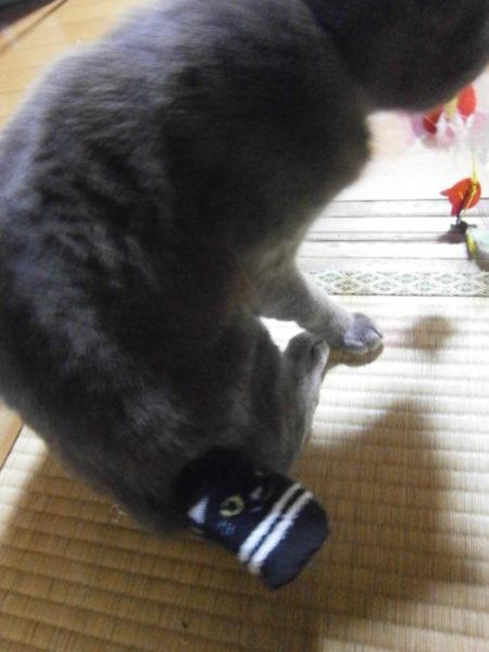猫のうさぎしっぽカバー