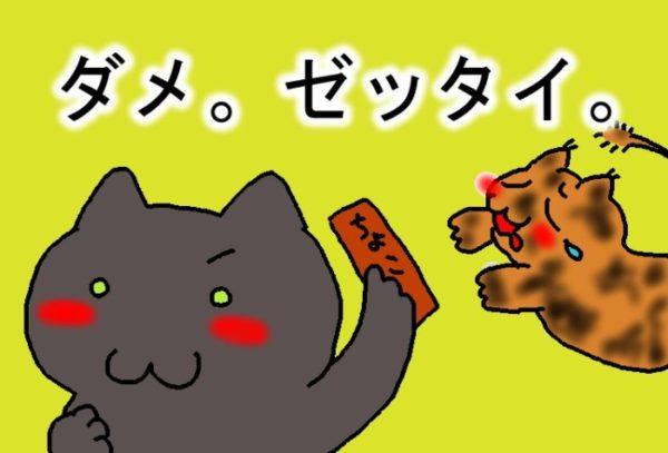 猫にチョコレートはダメ。ゼッタイ。