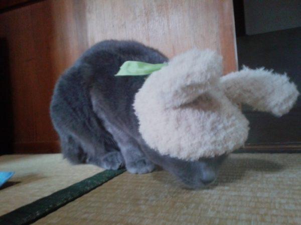 ちもふり~の卵【セリアのぼんぼんメーカーで猫のおもちゃ作成】