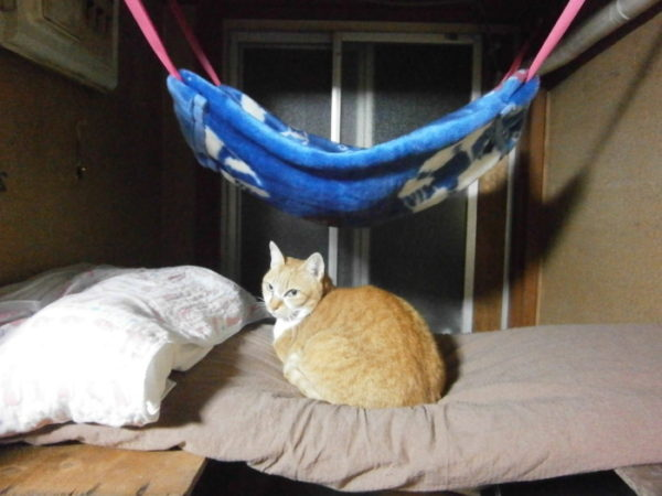 猫用ハンモック(ニャンモック)をDIY。