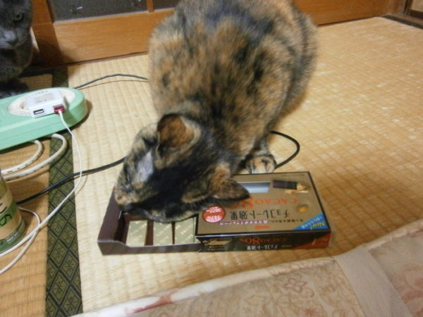 猫とチョコレートの危険な関係