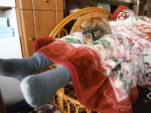 人の股の間で寝るさび猫しめじ