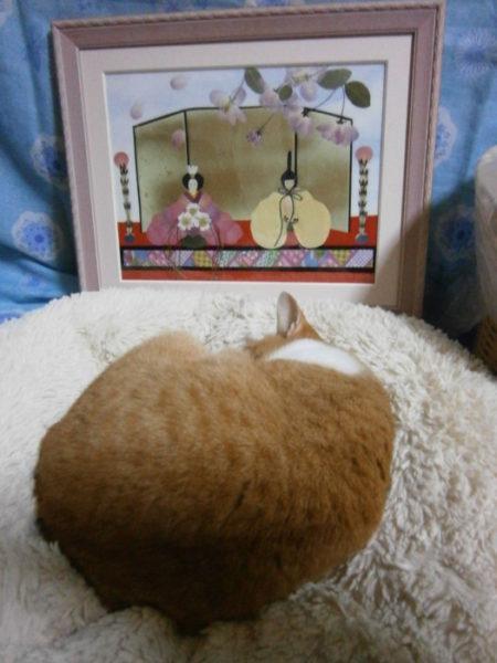 ひな祭りの押し花アートと黄色猫