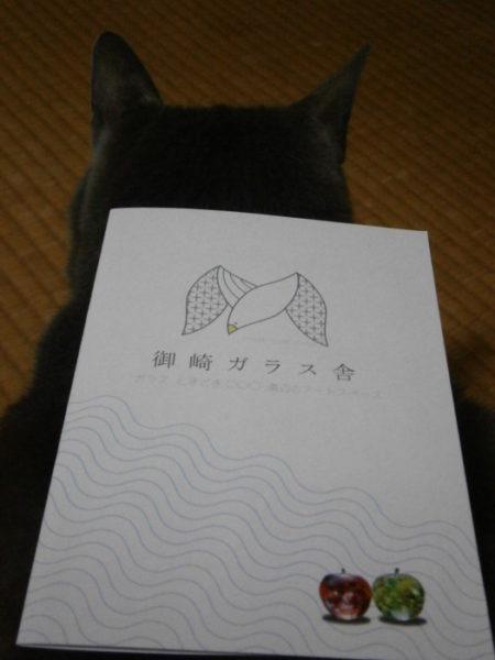 保護猫カフェでプチ浮気o(^ФωФ^)o
