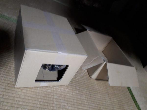 猫ホイホイの作り方