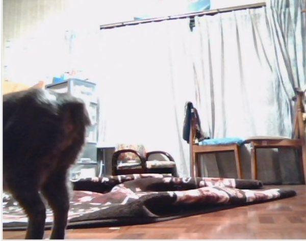 ラズパイとカメラで自作の見守りカメラで猫たちを温かく見守り