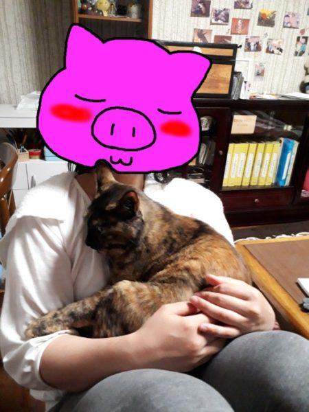 ペットシッターさんに子どもたちを託します。【1か月間、猫3匹をお願いします】