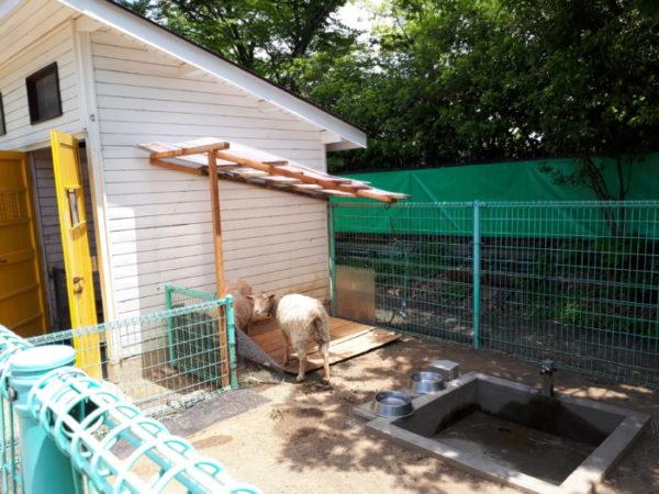 姫路市立動物園に行ってきた。ふれあい広場のヒツジ