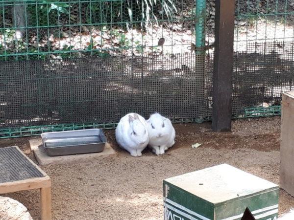 姫路市立動物園に行ってきた。ふれあい広場の仲良しウサギ
