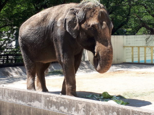 姫路市立動物園に行ってきた。ゾウの姫子、昼食